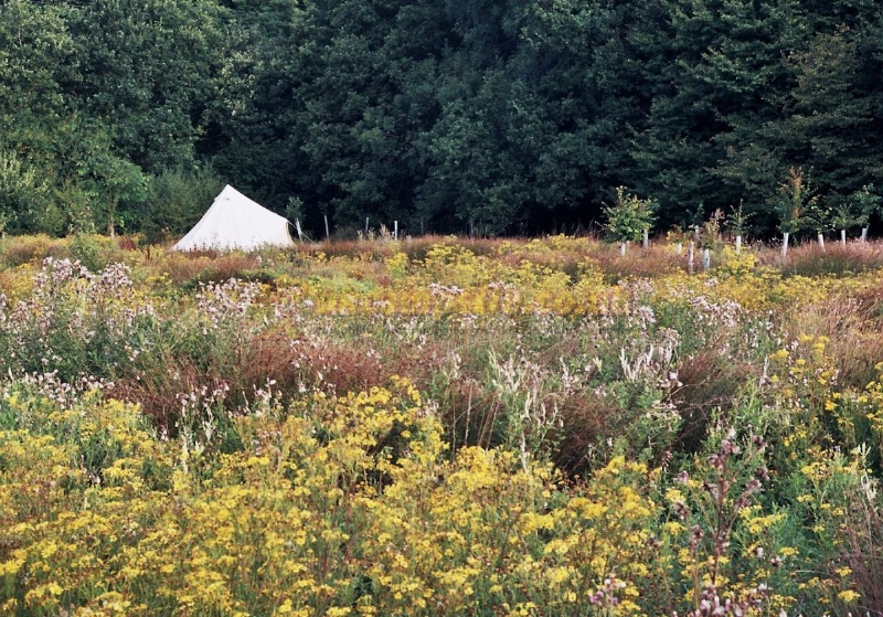 The secret campsite lewes reviews