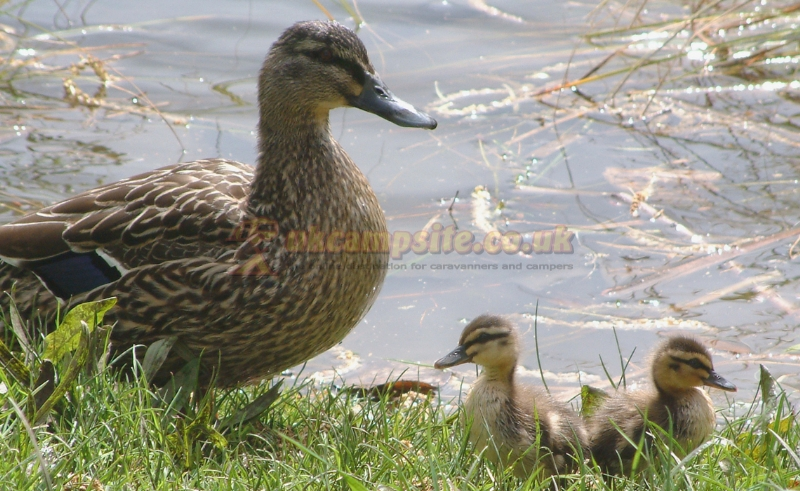 Bridge House Marina & Caravan Park