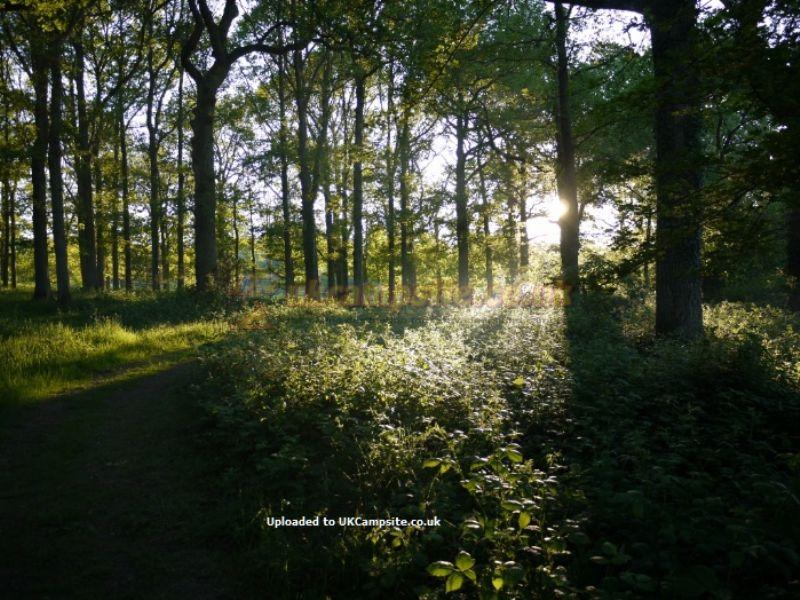 Evergreen Farm Woodland Campsite East Grinstead