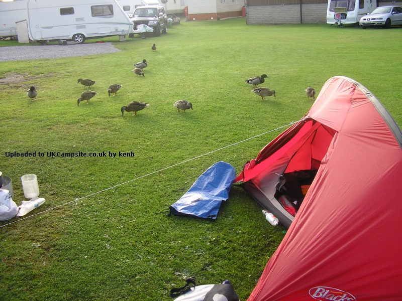 If ... & Blacks Octane 1 Tent Reviews and Details