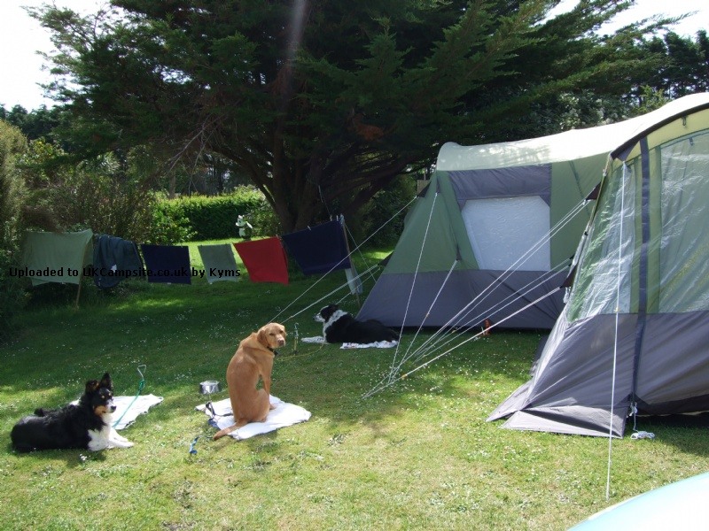 If ... & Aztec Falcon 8 Tent Reviews and Details